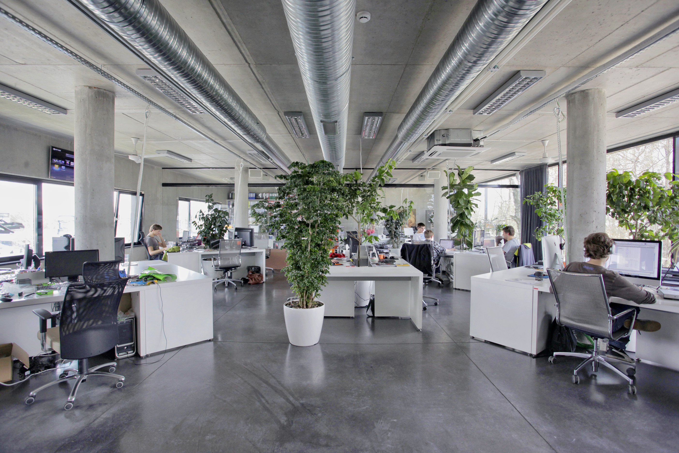 Plants give our industrial office a cozy feel