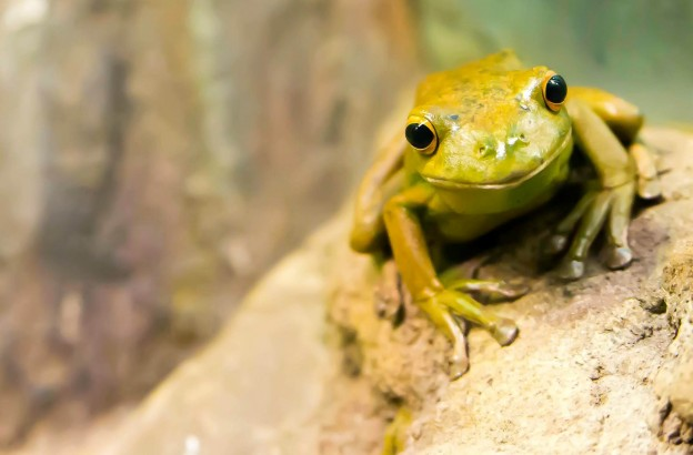 Why You Should Eat A Frog Every Morning